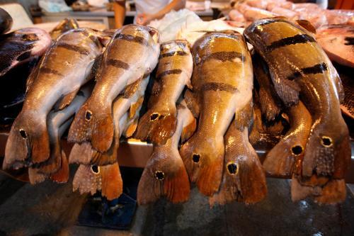 Foto de Adepará reforçará fiscalização da saída do pescado durante a Semana Santa
