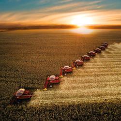 Foto de Na CBOT, milho tem dia de realização de lucros e fecha 5ª em campo negativo
