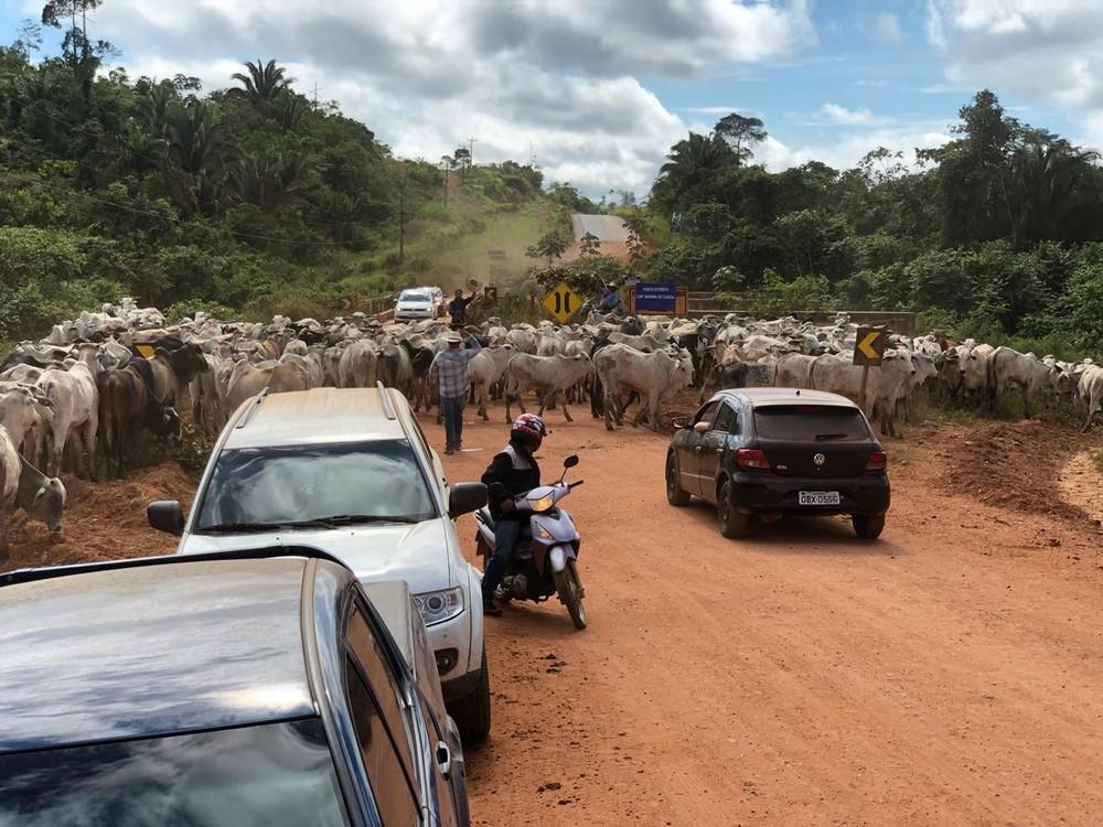 Foto de Trabalhadores são encontrados em situação de escravidão transportando gado a pé por 930 km no Pará