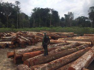 Foto de Fiscalização ambiental apreende madeira e equipamentos em pátios clandestinos