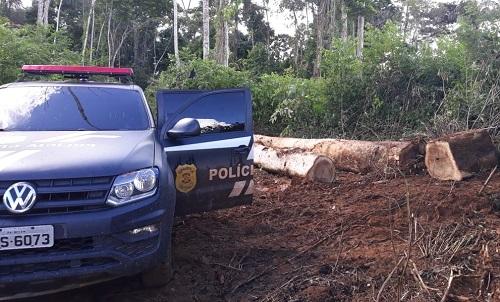 Foto de Polícia Civil apreende mais de 600 toras de madeira durante operação em Tucuruí