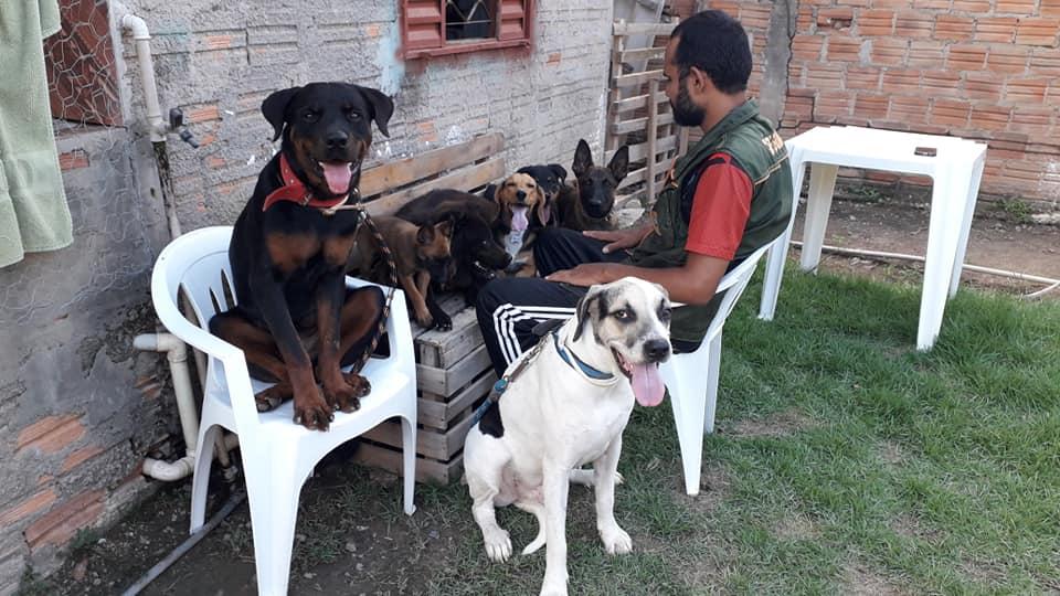 Foto de DICA: Adestramento de cães – Porque chamar um profissional?